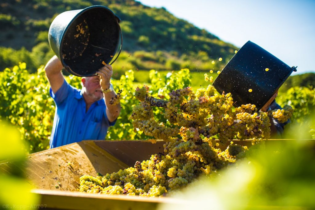 Etienne Kopp raisin vin