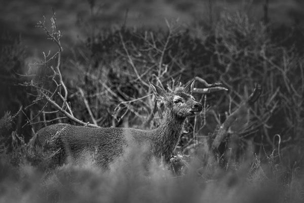 Deer USA etienne kopp photo indépendant