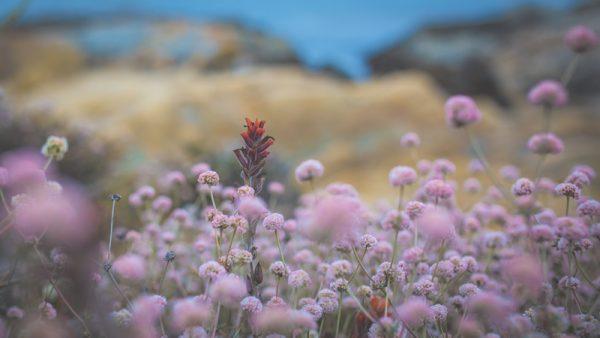 Californie photos nature